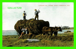 YARMOUTH, NOVA SCOTIA - LOADING EEL GRASS - ATTELAGE DE BOEUFS - PUB. BY VALENTINE-BLACK CO LTD - - Yarmouth