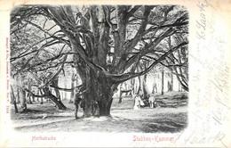 [DC13146] CPA - HERTHABUCHE - STUBBEN - KAMMER - ANIMATA IN RILIEVO - Viaggiata 1902 - Old Postcard - Da Identificare