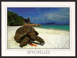 Seychelles Giant Tortoise Curieuse Island - Turtles