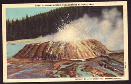 AK 002737 USA - Wyoming - Yellowstone National Park - Sponge Geyser - Yellowstone