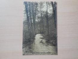 Houyet - L'Ivoine Dans Le Parc D'Ardenne - Houyet