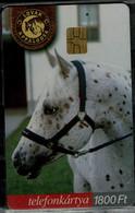 HUNGARY 2004 PHONECARD HORSES MINT VF!! - Cavalli