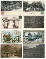 Lot Of 28 Cartes Postales Postcards CPA AK Cow Koe Vache Rund Runderen Hausrind Rind Cattle Bulls Animals Bull Stier - Cows
