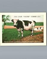 """Vache - Humoristique - J'ai L'air """" Vache """" Comme ça Mais ... - Cpm Non écrite - Cows"""