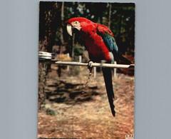 Perroquet Ara Cloreoptere Brésil - Zoo De La Palmyre - Le Clapet - 17 - Cpsm Gd Format Dentelée - Pájaros