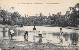 Colomb-Béchar - La Palmeraie - Le Trou Du Chameau - Bechar (Colomb Béchar)