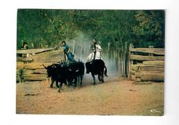 CGF-CPM  - En Camargue - Manade De Toros - Voyagée 14/10/1986 - Bull
