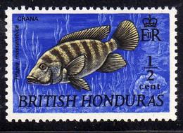 BRITISH HONDURAS BRITANNICO 1969 FISHES PESCI CRANA FISH PESCE CENT. 1/2c MNH - British Honduras (...-1970)