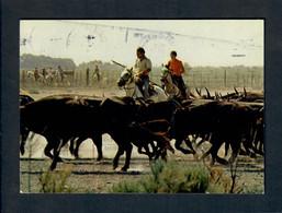 CGF-CPM La Camargues Gardians Et Leur Manade De Taureaux  - Postée A Nimes 18/02/86 - Bull