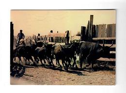 CGF-CPM La Camargue Taureaux Arrivant Au Trial - Postée De Nimes Le 20/11/1985 - Bull