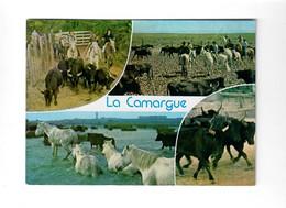 CGF-CPM 6 En Camargue - Toros En Camague - Photo Claude Noyer  (22/02/1986) - Bull