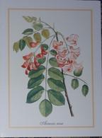 Petit Calendrier Poche 2001 Acacia Rose - Pharmacie St Saint Bonnet Hautes Alpes - Formato Piccolo : 2001-...