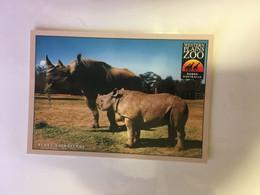 (1 A 24) Black Rhinoceros At Dubbo Open Plain Zoo - Rhinoceros