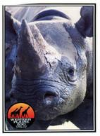 (RR 13) Australia - NSW - Dubbo Western Plain Zoo Rhinoceros + Rhino Survival Sticker (2 Items) - Rhinoceros
