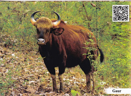 GAUR BULL- PPC WITH QR CODE-WILDLIFE DIVERSITY-BONDLA SANCTUARY-GOA CIRCLE-INDIA-MNH-MNC-211 - Bull