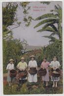 Coffee Pickers. Peralta, C.R. - Costa Rica