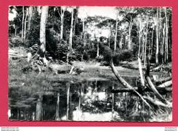 CPSM (Ref : BB 234) (AFRIQUE -GABON) Les Marais Route De KANGO - Gabun