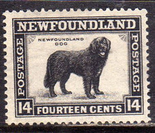 CANADA NEWFOUNDLAND 1932 1937 DOG CANE CENT. 14c MNH - Unused Stamps