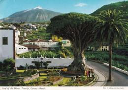 Tenerife - Icod Of The Wines - Canary Island - Formato Grande Viaggiata – E 14 - Tenerife
