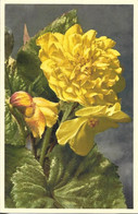 FLORE + Carte Postale Neuve THOR E GYGER + N° 889 : Begonia Tuberhybrida Voss. - Begonia Jaune + Imprimé En Suisse - Fiori