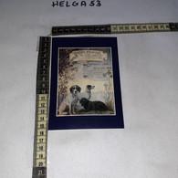 FB11214 FIRENZE GRUPPO CINOFILO FIORENTINO - 1981-90: Storia Postale