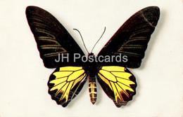 Papilio Aecus Kaguya - Butterfly - Old Postcard - France - Unused - Butterflies