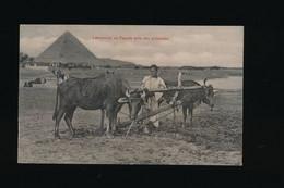 CPA - Egypte -  Laboureur En Egypte Près Des Pyramides -  Paysan Métier - Sonstige