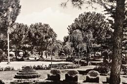 Cartolina - Senigallia - Giardini Pubblici - 1956 - Ancona