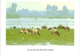 """Thème - Animaux - Vache - """"la Vie Est Une Donnée Unique !"""" - Cows"""