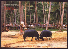 AK 003101 THAILAND - Samui - Buffalo Fighting - Tailandia