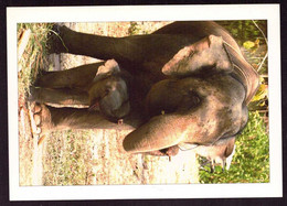 AK 003102 THAILAND - Baby Elephant & Mother - Tailandia