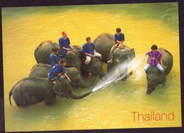 AK 003103 THAILAND - Chiangmai - Elephant Training - Tailandia