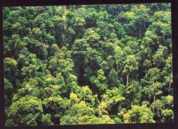 AK 003110 THAILAND - Royal Forest Department - Tailandia