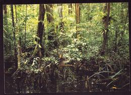 AK 003112 THAILAND - Royal Forest Department - Tailandia
