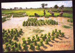 AK 003118 THAILAND - Planting Rice - Tailandia