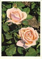 FLORE + Carte Postale Neuve Jean ZELTNER + N° 1112 : Rosen - Roses + Fabrication Suisse - Fiori
