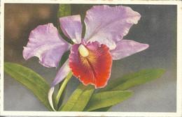 FLORE + Carte Postale Neuve HB Photo Chromie + N° 4246 : ORCHIDEE - Fiori