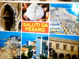 PESARO VEDUTE CONCHIGLIA SHELL  N1975   IG10589 - Pesaro
