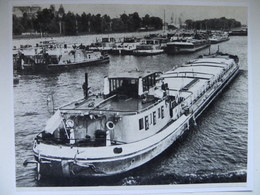 Polish Barges On The River Odra / Tug   /  Photo Reproduction - Autres