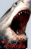 (5 A 19) Australia - Shark (shape Postcard) Requin - Pesci E Crostacei