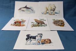 6 X Kunstdruck Tiere  -  Husky - Delphin - Eisbär - Seeadler - Koala - Tiger - Ca. 17,5 X 25,5 Cm Größe - Stampe
