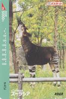 Carte Prépayée JAPON  - ANIMAL  - OKAPI - JAPAN Prepaid Passnet Sotetsu Train Card / Girafe Giraffe - 165 - Non Classificati