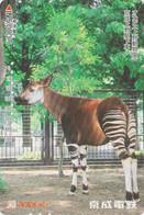 Carte Prépayée JAPON  - ANIMAL - OKAPI - JAPAN Prepaid Passnet Skyliner Train Card / Girafe Giraffe - 167 - Non Classificati
