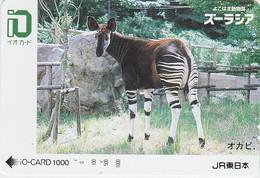 Carte Prépayée JAPON  - ANIMAL - OKAPI - JAPAN Prepaid JR IO Train Card / Girafe Giraffe - 170 - Non Classificati
