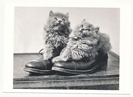 """CPSM / CPM 10.5 X 15  Chat (43) 2 Chatons Chacun Dans Une Chaussure  """"Anonyme"""" Collection Imagine Noire - Cats"""