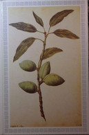 Petit Calendrier Poche 1987 Fruit Amande Pharmacie Cogolin Var - Engelhard Angouleme - Formato Piccolo : 1981-90