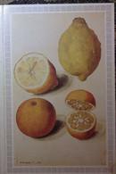 Petit Calendrier Poche 1987 Fruit Citron Pharmacie Ste Luce Sur Loire Loire Atlantique - Engelhard Angouleme - Formato Piccolo : 1981-90