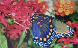 Petit Calendrier De Poche 1998 Papillon Pharmacie Vigeois Corrèze - Format Carte Bleue - Formato Piccolo : 1991-00