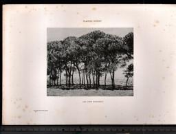 Claude Monet, Les Pins Parasols ( Reproduction Papier) - Altri