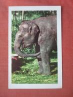 Indian Elephant.  >   Ref 5216 - Elefanti